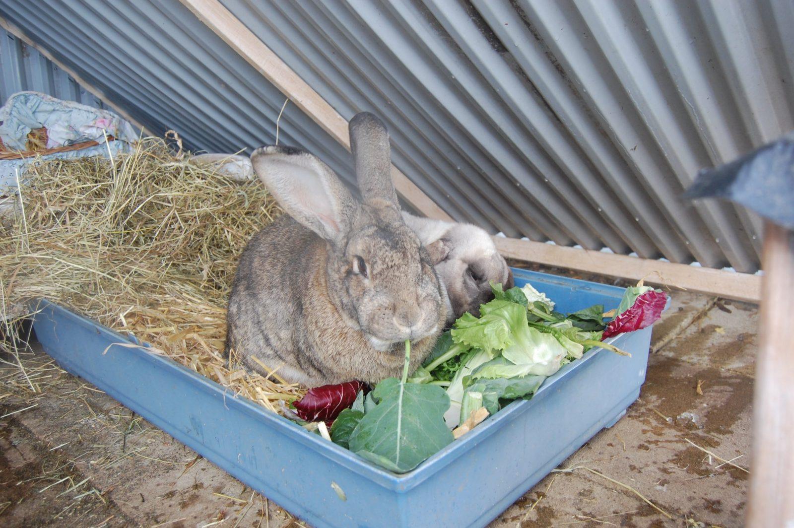 Kaninchen Spielzeug Selber Bauen  Fkh von Kaninchen Spielplatz Selber Bauen Bild