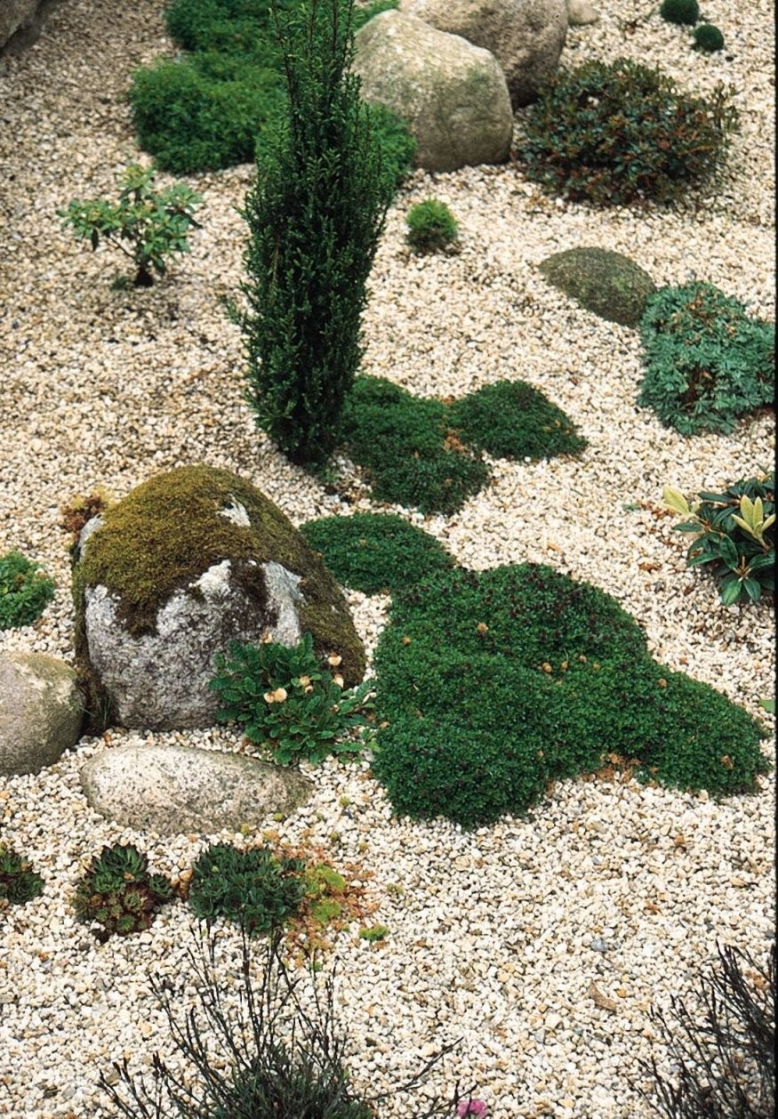 Kiesgarten Anlegen Und Mit Gräsern Bepflanzen  Garten  Kiesgarten von Gartengestaltung Mit Kies Und Gräsern Bild