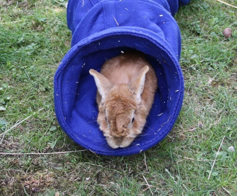 Macht Kaninchenspielzeug Wirklich Sinn Und Was Ist Zu Empfehlen von Kaninchen Spielplatz Selber Bauen Bild