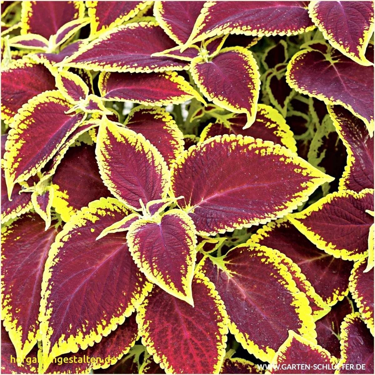 Mein Schoner Garten Lidl 45 Beispiel  Vetosb202 von Mein Schöner Garten Lidl Photo