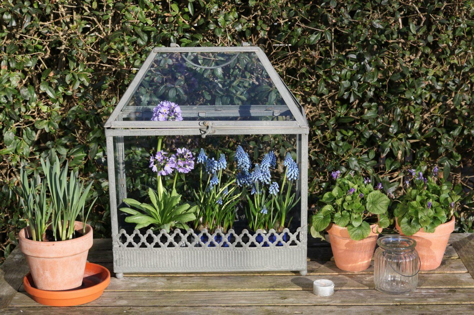Minigewächshaus Für Den Balkon Tipps Zur Bepflanzung von Mini Gewächshaus Selber Bauen Frischhaltefolie Photo