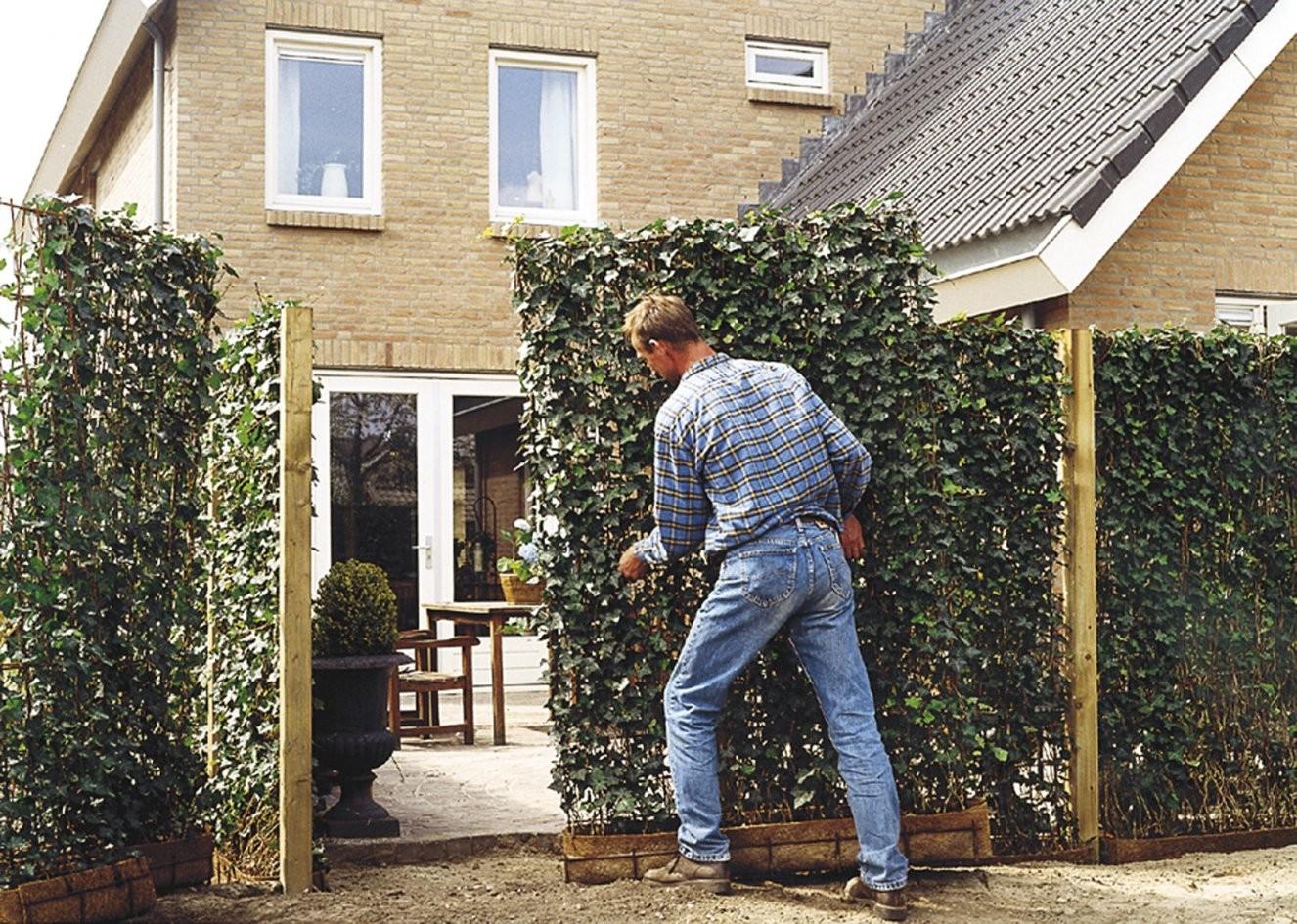 Moderner Sichtschutz Im Garten  Seite 4 Von 4  News Informationen von Moderner Sichtschutz Für Den Garten Photo