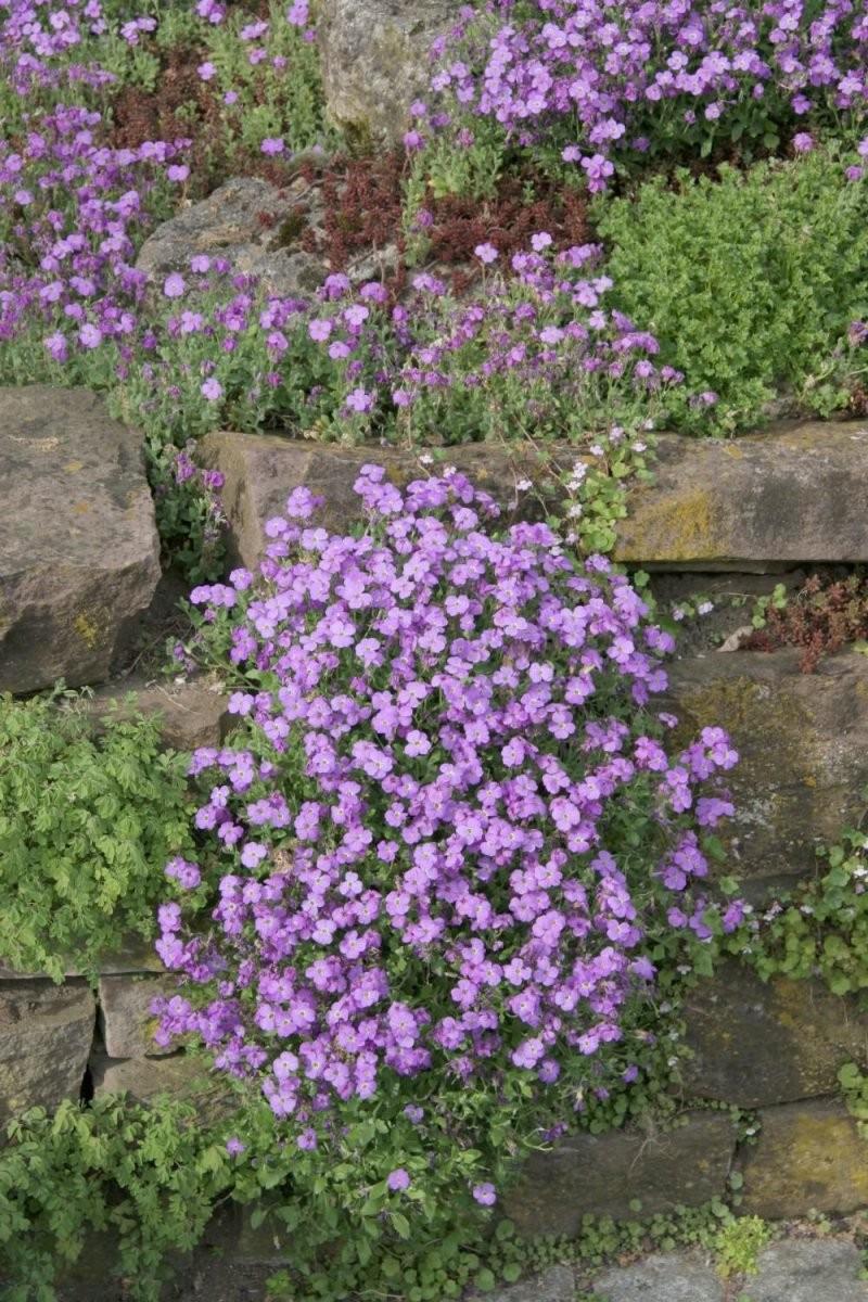 Natursteinmauern Farbenfroh Bepflanzen  Garden  Planting Flowers von Pflanzen Für Sehr Sonnigen Standort Photo