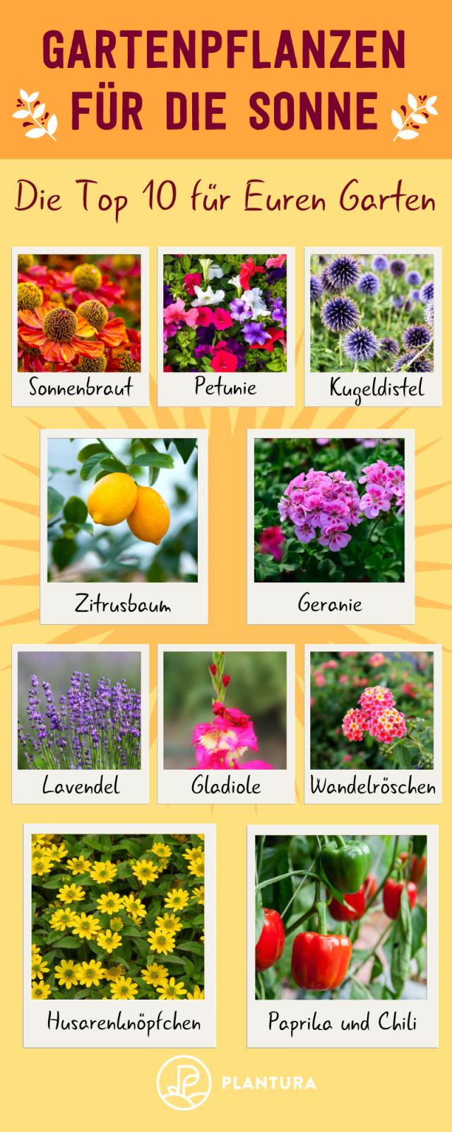 Pflanzen Für Die Pralle Sonne Die Top 10 Für Garten  Balkon  Der von Balkonpflanzen Für Pralle Sonne Bild