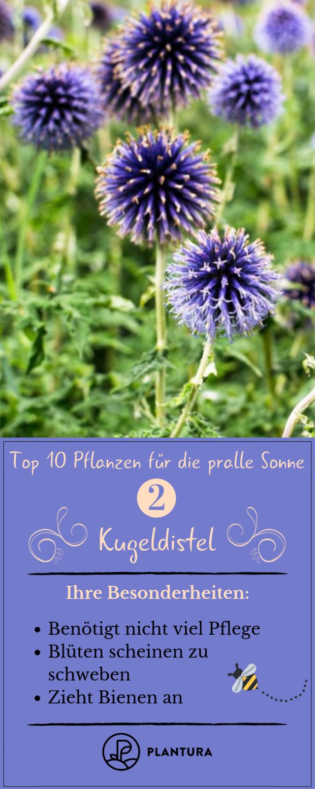 Pflanzen Für Die Pralle Sonne Die Top 10 Für Garten  Balkon von Balkonpflanzen Für Pralle Sonne Bild