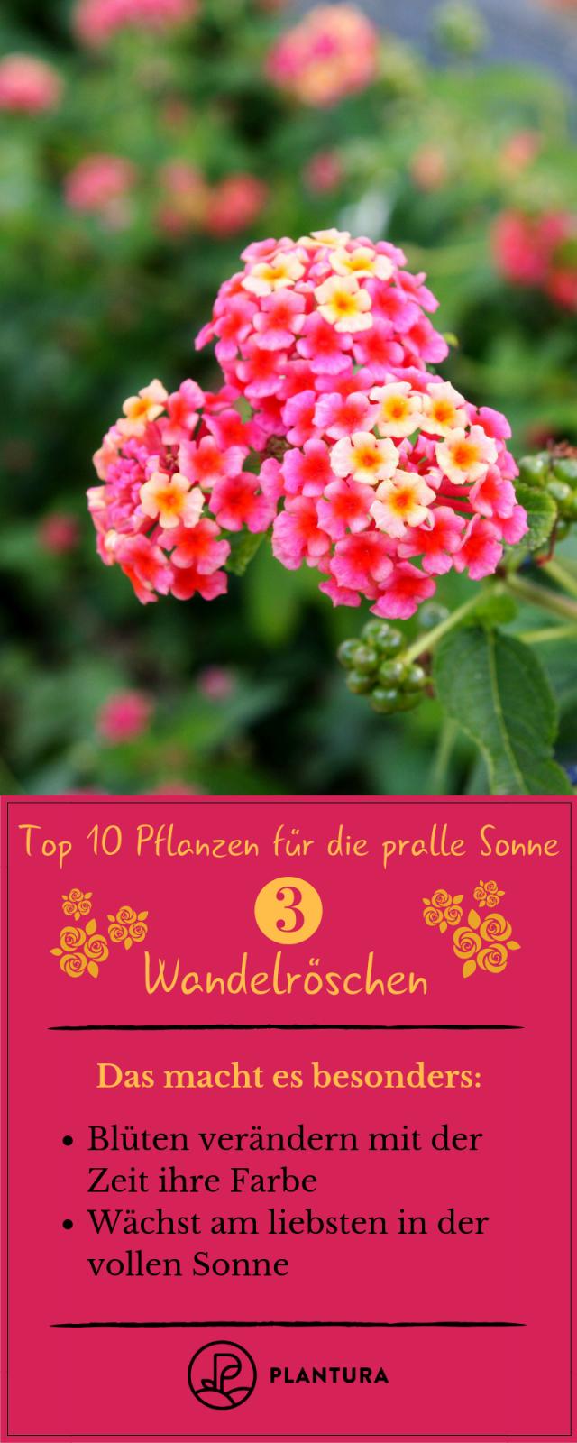 Pflanzen Für Die Pralle Sonne Die Top 10 Für Garten  Balkon von Balkonpflanzen Für Pralle Sonne Photo