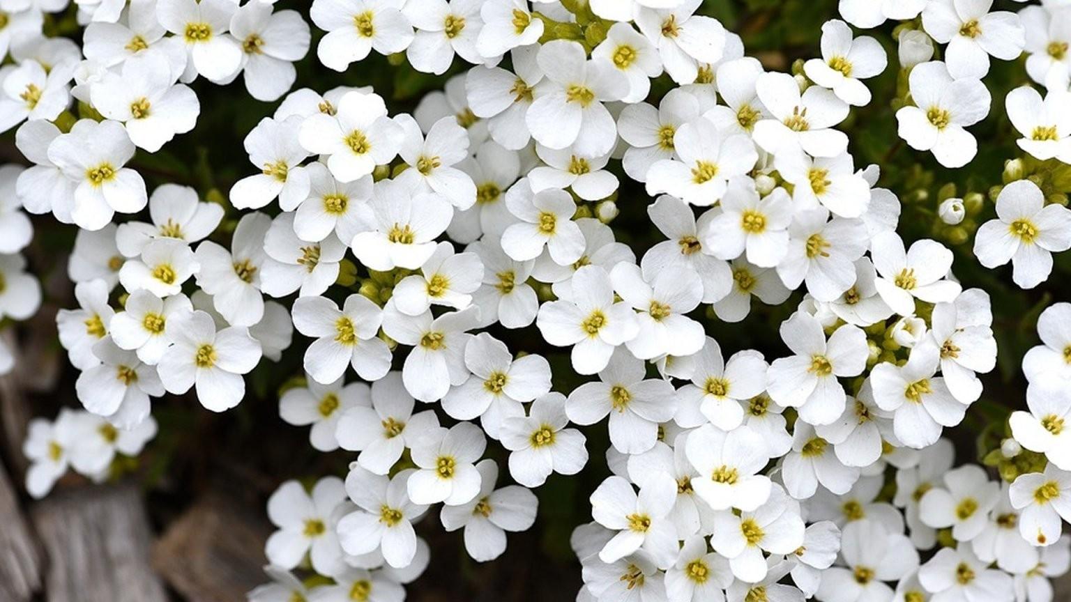 Pflanzen Für Die Pralle Sonne Diese Arten Eignen Sich  Focus von Balkonpflanzen Für Pralle Sonne Bild