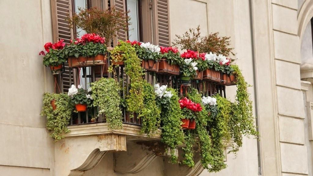 Pflanzen Für Pralle Sonne Diese Pflanzen Sind Pflegeleicht Und von Balkonpflanzen Für Pralle Sonne Bild