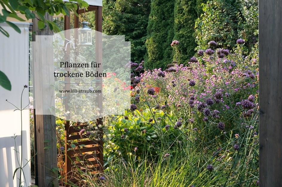 Pflanzen Für Trockene Beete  Lilli Straub  Den Traumgarten Planen von Stauden Sonniger Trockener Standort Photo