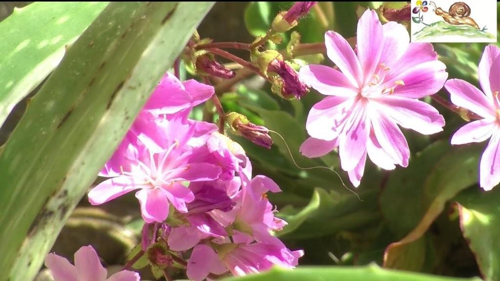Pflanzen Für Trockene ☼ Sonnige ☼ Heiße ☼ Standorte Z B Unter von Stauden Sonniger Trockener Standort Bild