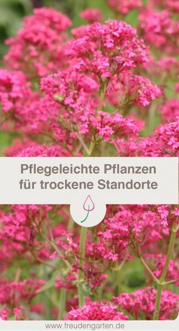 Pflanzen Für Trockene Und Sonnige Standorte  Garden Ideas  Cottage von Stauden Sonniger Trockener Standort Photo