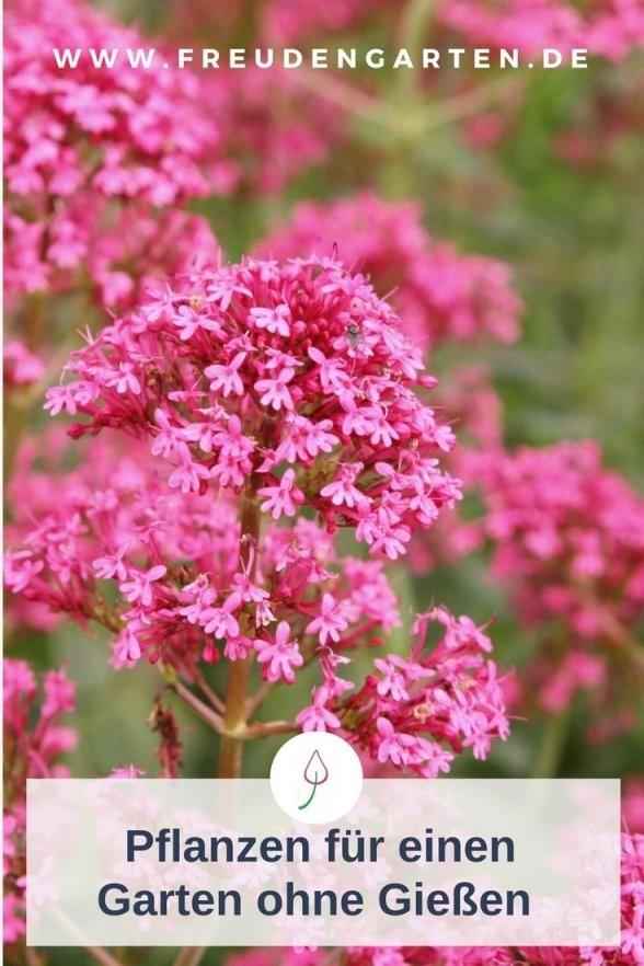 Pflanzen Für Trockene Und Sonnige Standorte  Gardening  Balkon von Pflanzen Für Sonnige Trockene Standorte Photo