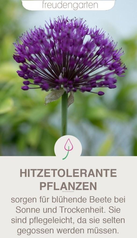 Pflanzen Für Trockene Und Sonnige Standorte  Garten  Garten von Pflanzen Für Sehr Sonnigen Standort Bild