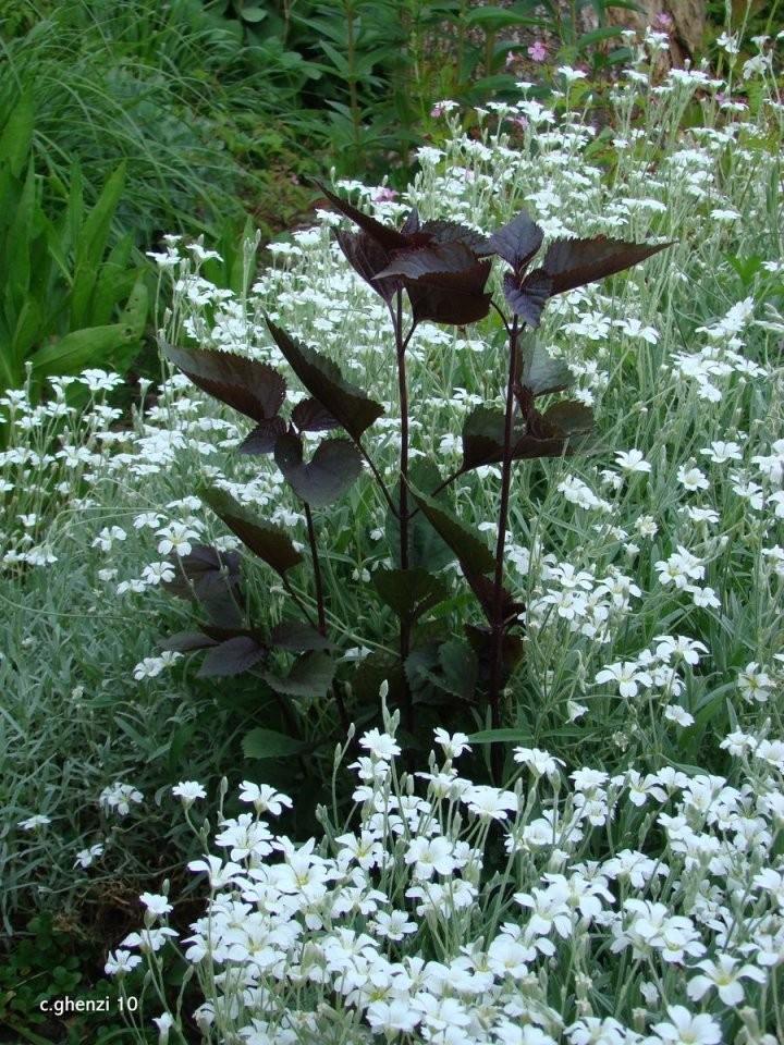 Pflanzen Für Trockene Und Sonnige Standorte  Garten von Stauden Sonniger Trockener Standort Photo