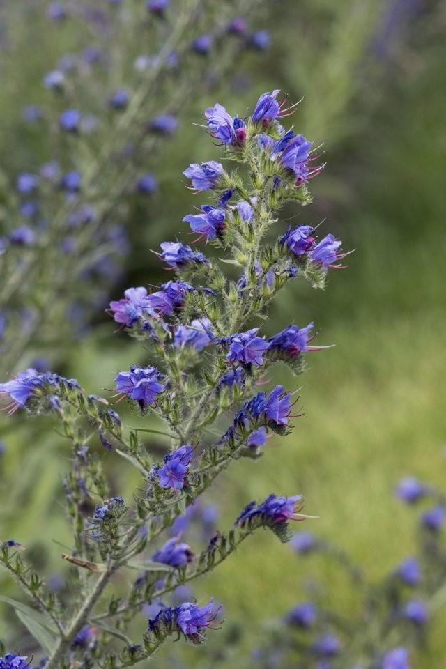 Pflanzen Für Trockene Und Sonnige Standorte von Stauden Sonniger Trockener Standort Bild