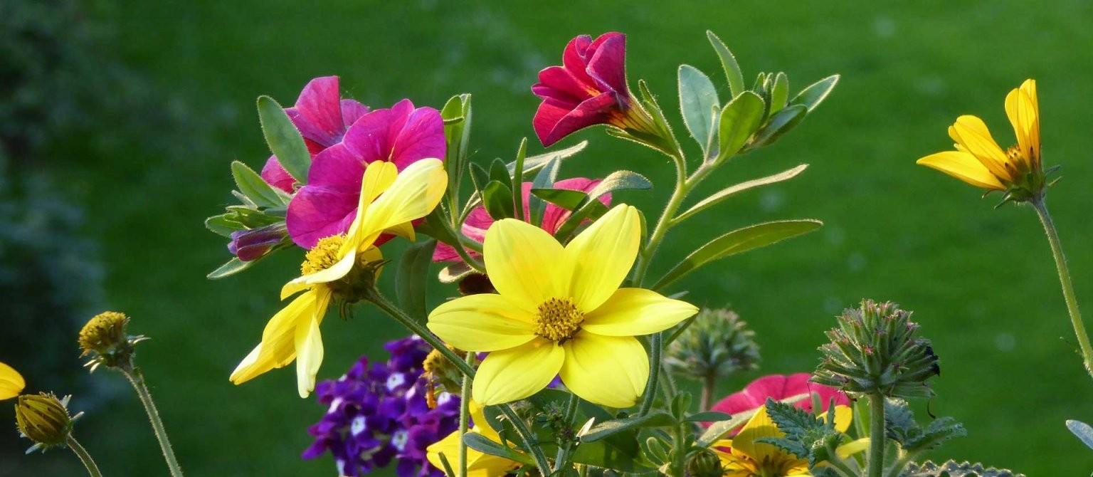 Pflanzen Für Volle Sonne Auf Balkon Und Terrasse  Vivanno von Pflanzen Für Sehr Sonnigen Standort Bild