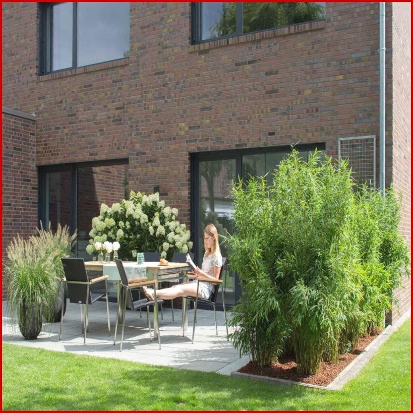 Pflanzen Sichtschutz Terrasse Kübel Beste Zum Sichtschutz Pflanzen von Pflanzen Als Sichtschutz Terrasse Photo