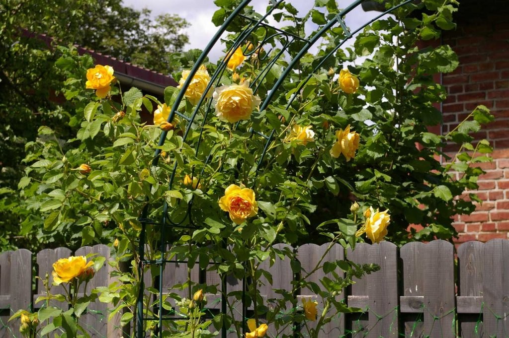 Rosenbogen Mit Tür von Rosenbogen Aus Holz Selber Bauen Photo