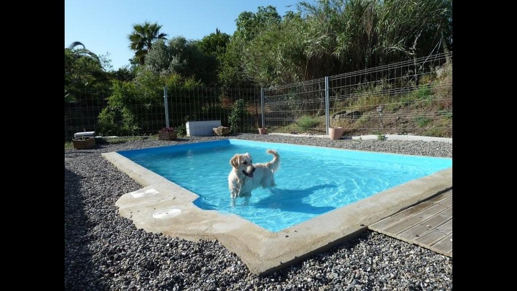 Sammy Balu Und Arizona Im Hundepool  Youtube von Hunde Pool Selber Bauen Photo