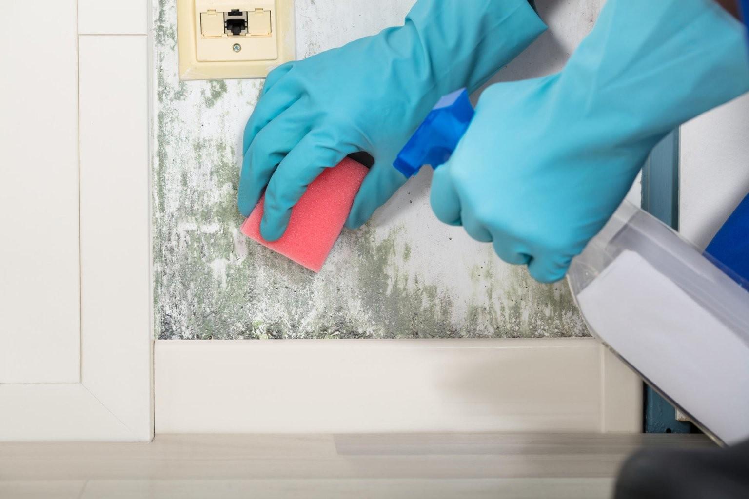 Schimmel Dauerhaft Im Haus Entfernen Hilfreiche Tipps Und Methoden von Rotweinflecken An Der Wand Photo