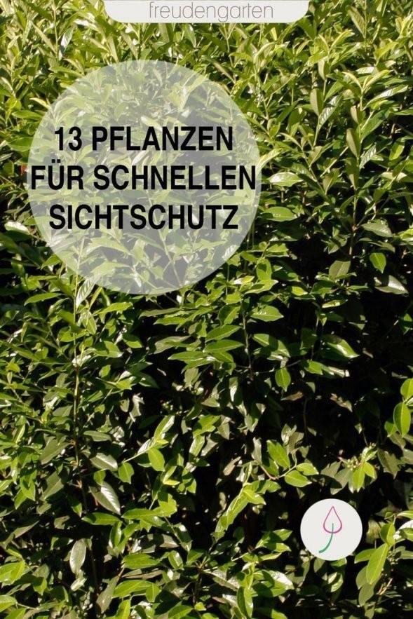 Schnell Wachsende Pflanzen  Bäume Und Sträucher Für Den Garten von Schnell Wachsende Bäume Für Kleine Gärten Bild