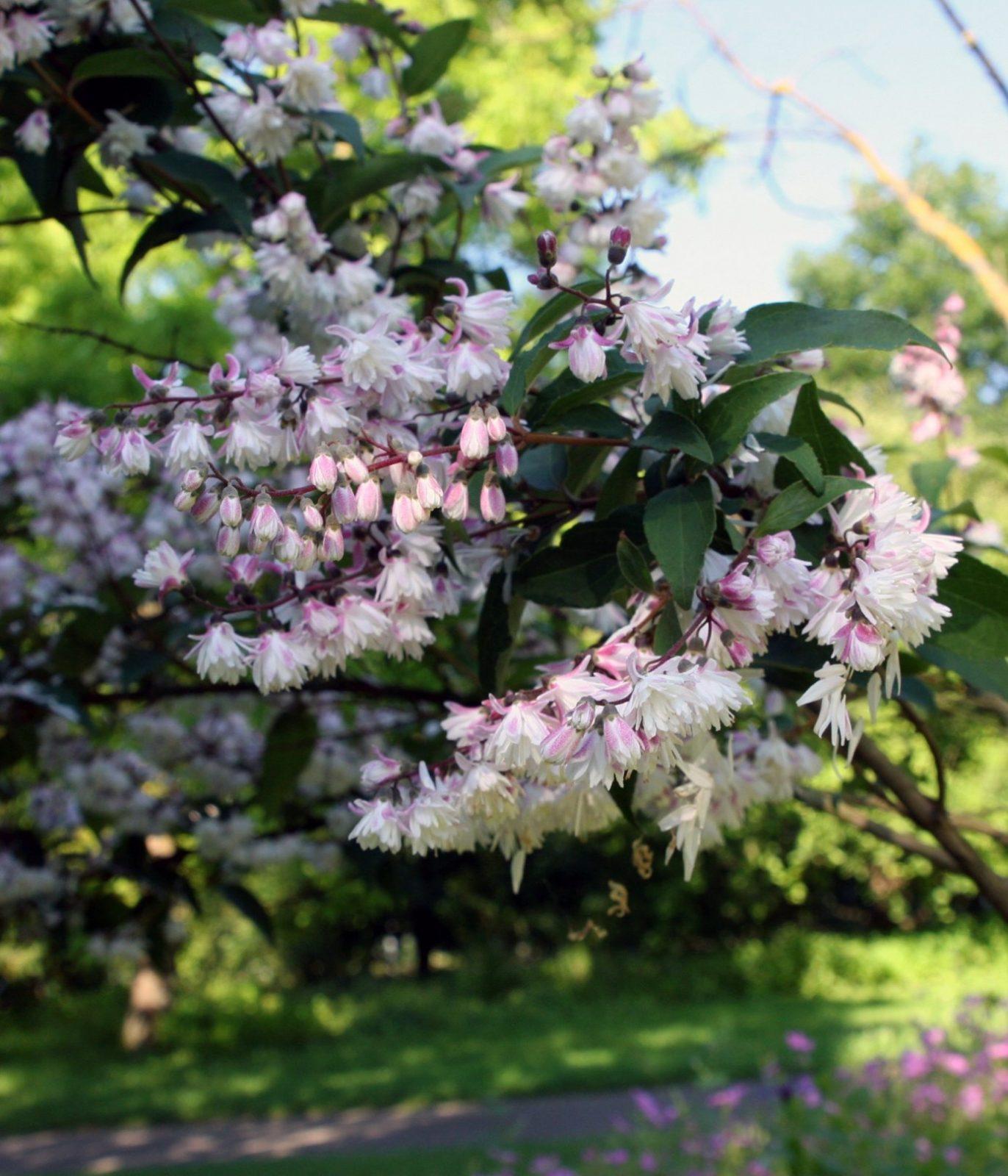 Schnell Wachsende Pflanzen von Schnell Wachsende Bäume Für Kleine Gärten Photo