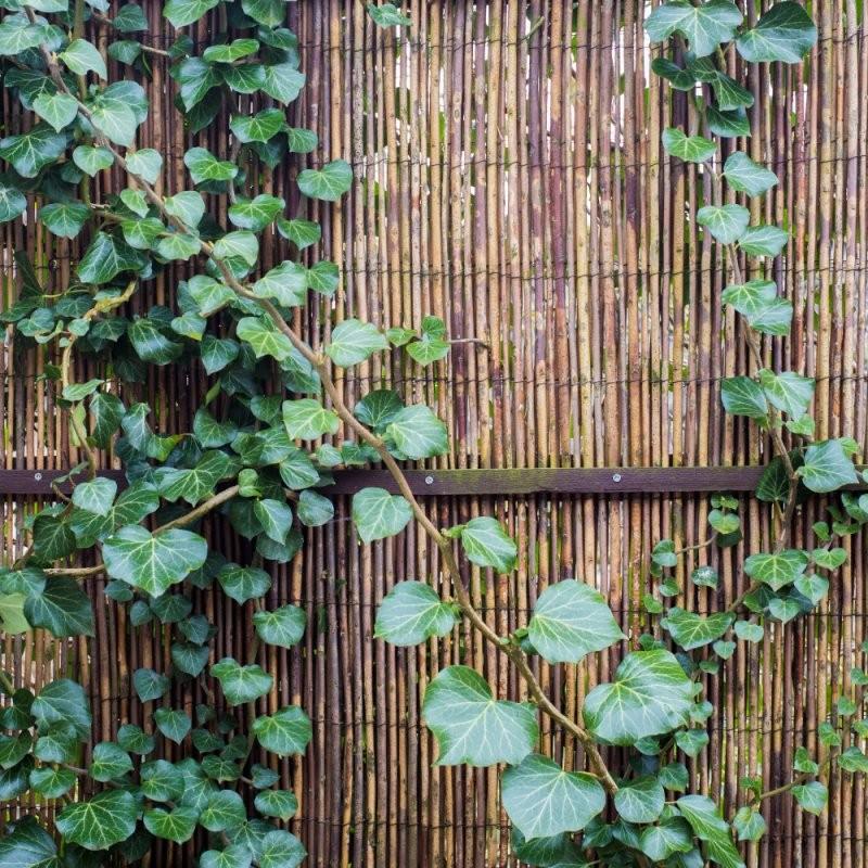 Sichtschutz Für Den Balkon Selber Machen  So Geht's von Sichtschutz Für Balkon Selber Machen Bild