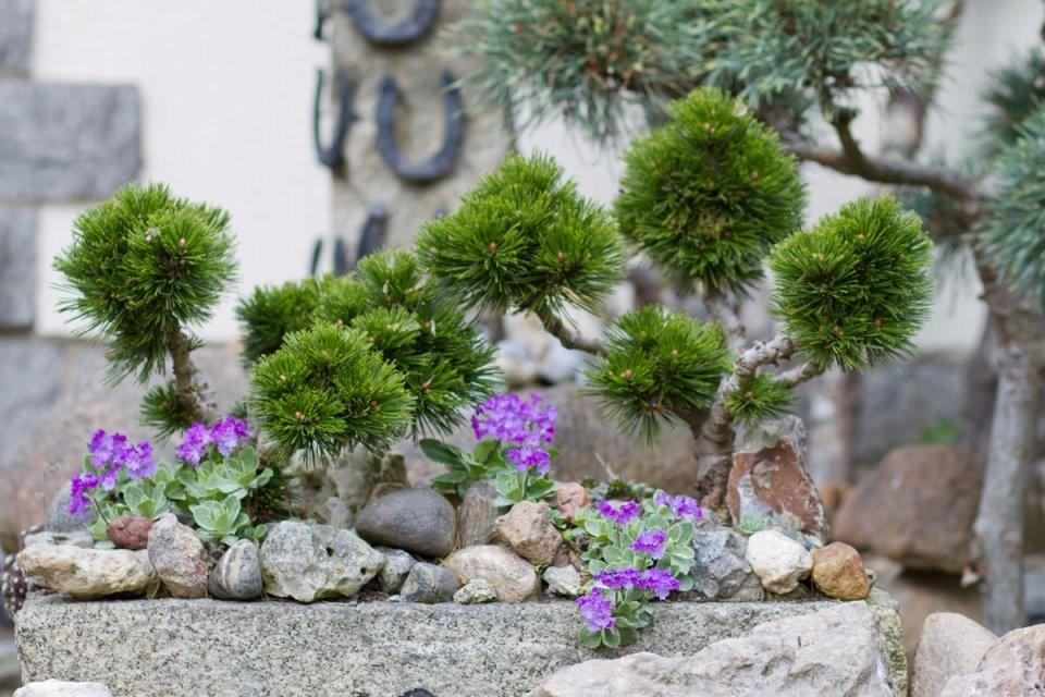 Steingarten Gestalten – Tipps Für Das Eigene Steinbeet  Garten von Steingarten Anlegen Anleitung Bilder Bild