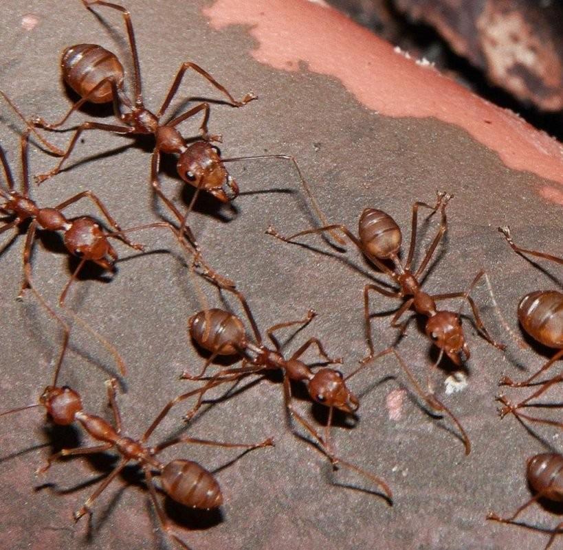 """Terrassenschutz """"Blumentopftrick"""" Hilft Im Kampf Gegen Ameisen  Welt von Ameisen In Der Küche Bild"""