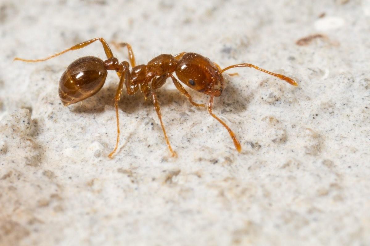 Tiere Im Badezimmer  Woher Kommen Motten Ameisen  Co  Zuhause von Motten Im Haus Woher Bild