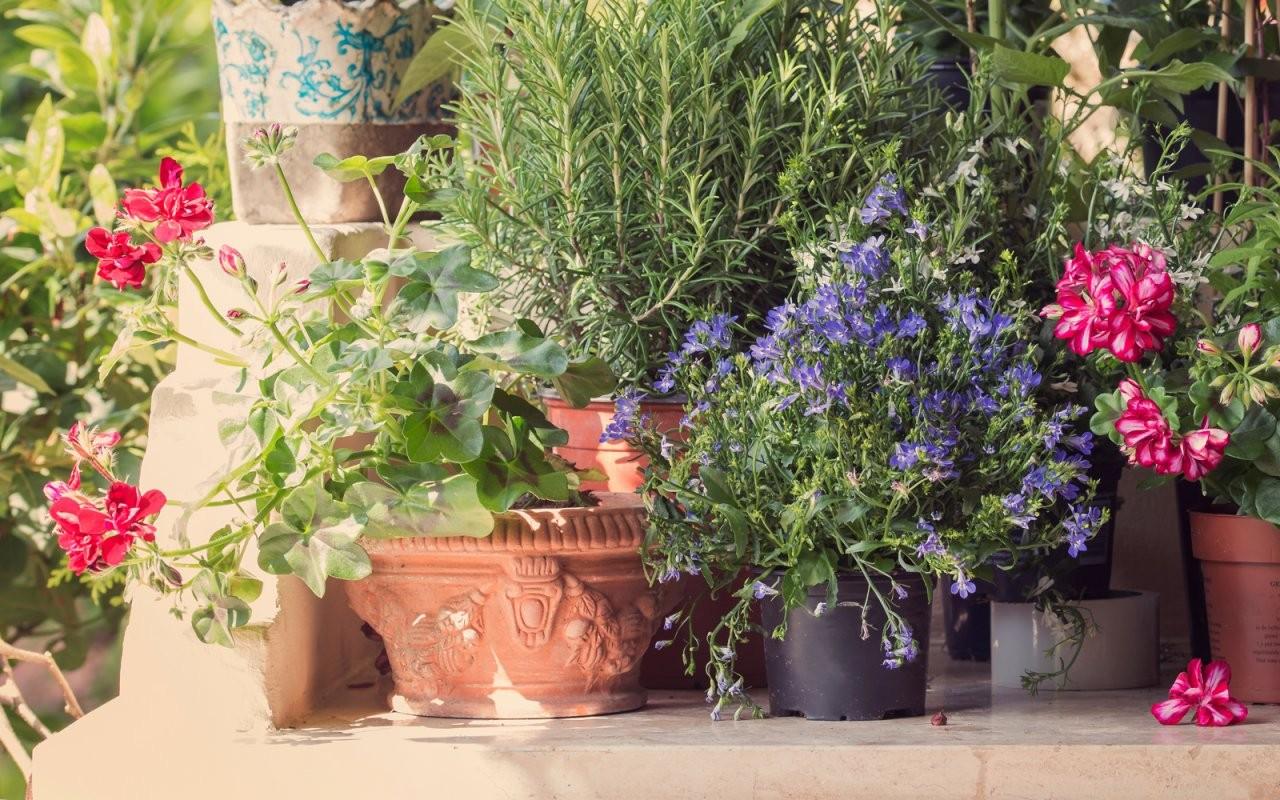 Tipps Zu Pflanzen Und Kräutern Für Balkon Und Garten  Mycard Von Viseca von Balkonpflanzen Für Pralle Sonne Bild
