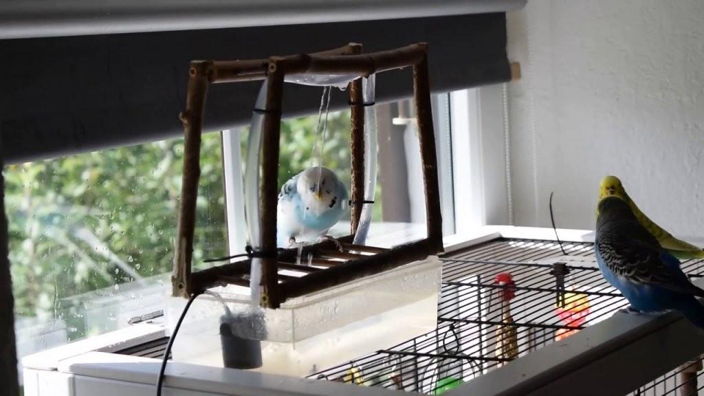 Vogeldusche Für Wellensittiche Und Vögel Selbst Bauen  Youtube von Wellensittich Spielzeug Selber Machen Photo