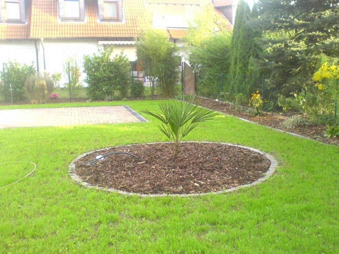 Vorgarten Gestalten Mit Kies Und Gräsern Meinung von Vorgarten Gestalten Mit Kies Und Gräsern Bild