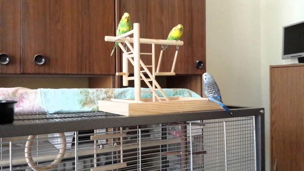 Wellensittich Holz Spielplatz  Youtube von Wellensittich Spielzeug Selber Machen Photo