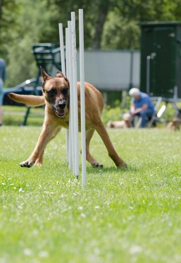 Wie Können Sie Einen Agility Parcour Für Ihren Hund Selber Bauen von Hunde Wippe Selber Bauen Photo