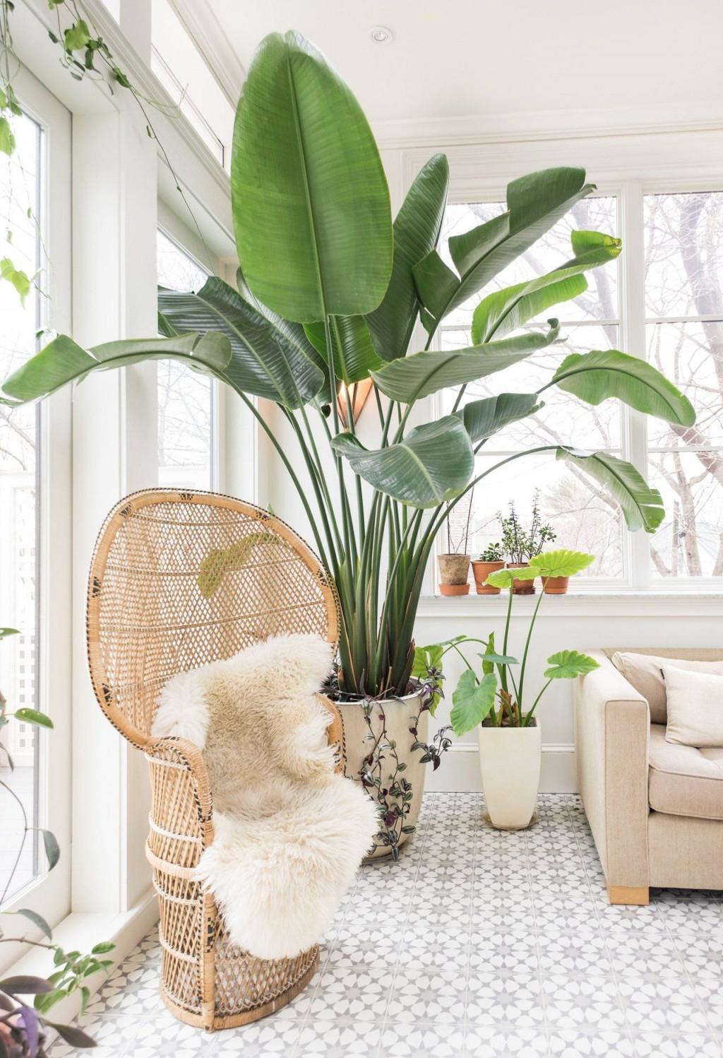 5 Pflegeleichte Zimmerpflanzen Für Euer Zuhause von Blumenecke Im Wohnzimmer Gestalten Photo