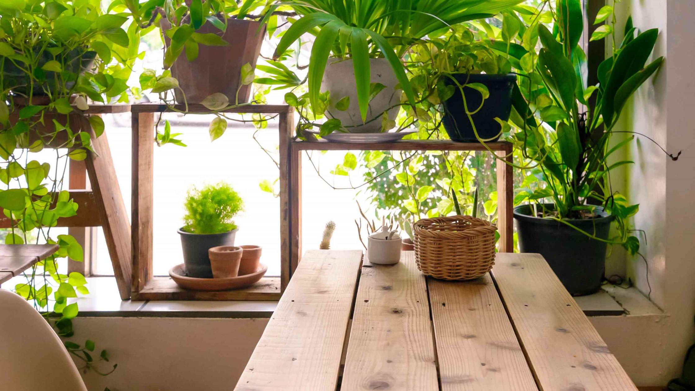 5 Tipps Wie Ihr Euer Wohnzimmer In Einen Urban Jungle Verwandelt von Wohnzimmer Mit Pflanzen Gestalten Photo