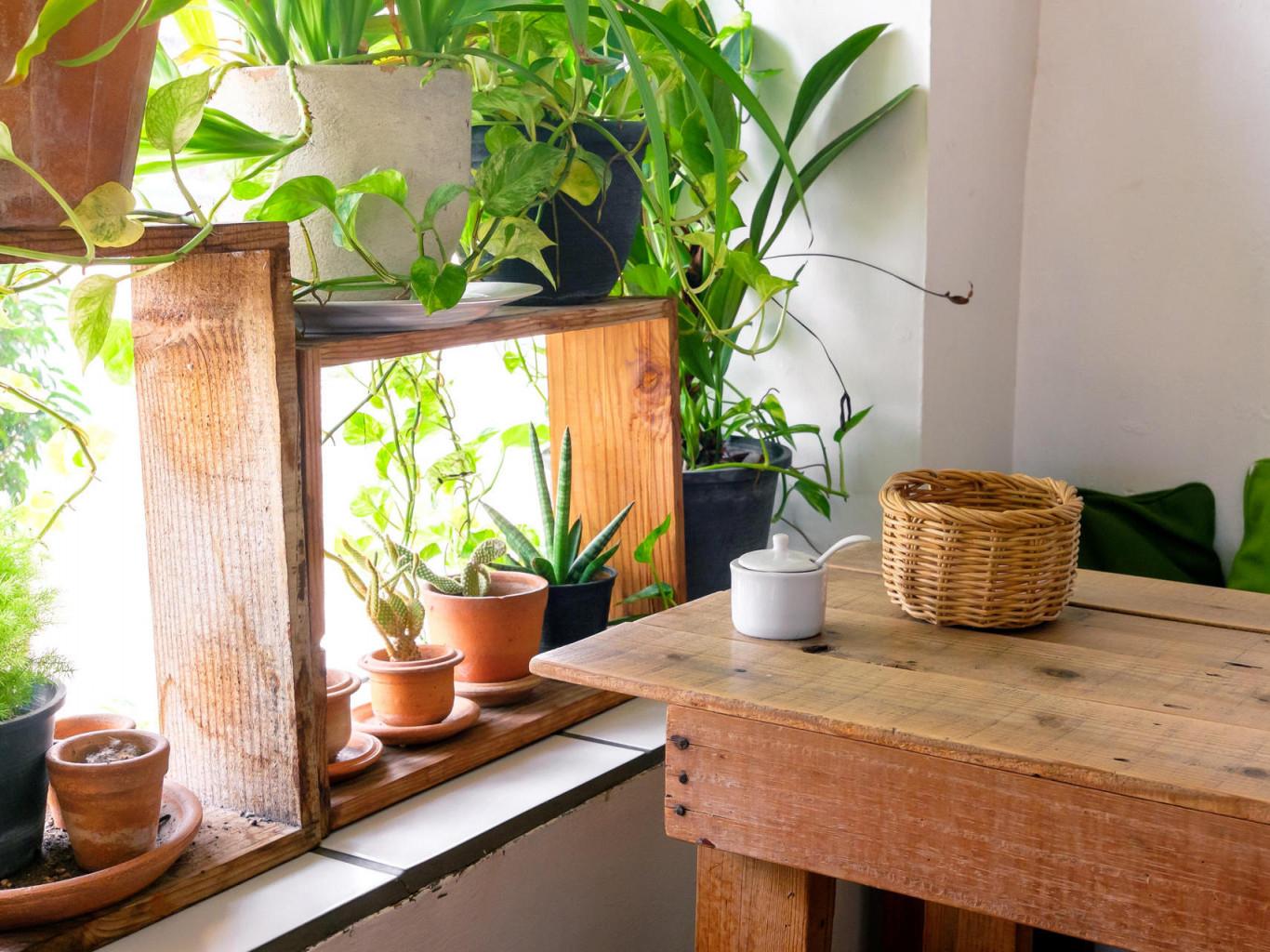 Der Perfekte Standort Wo Sich Zimmerpflanzen Am Wohlsten Fühlen von Wohnzimmer Mit Pflanzen Gestalten Photo