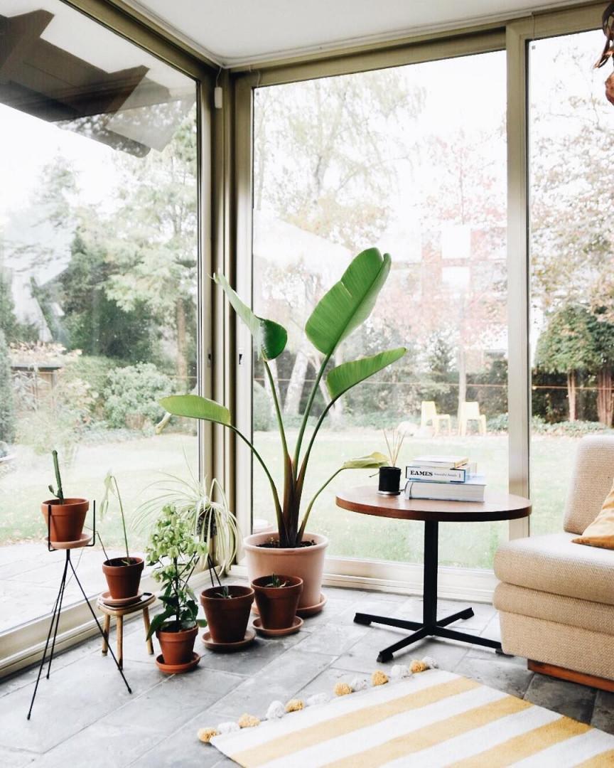 Die 300 Besten Bilder Zu Wohnen Mit Pflanzen  Pflanzen von Blumenecke Im Wohnzimmer Gestalten Photo