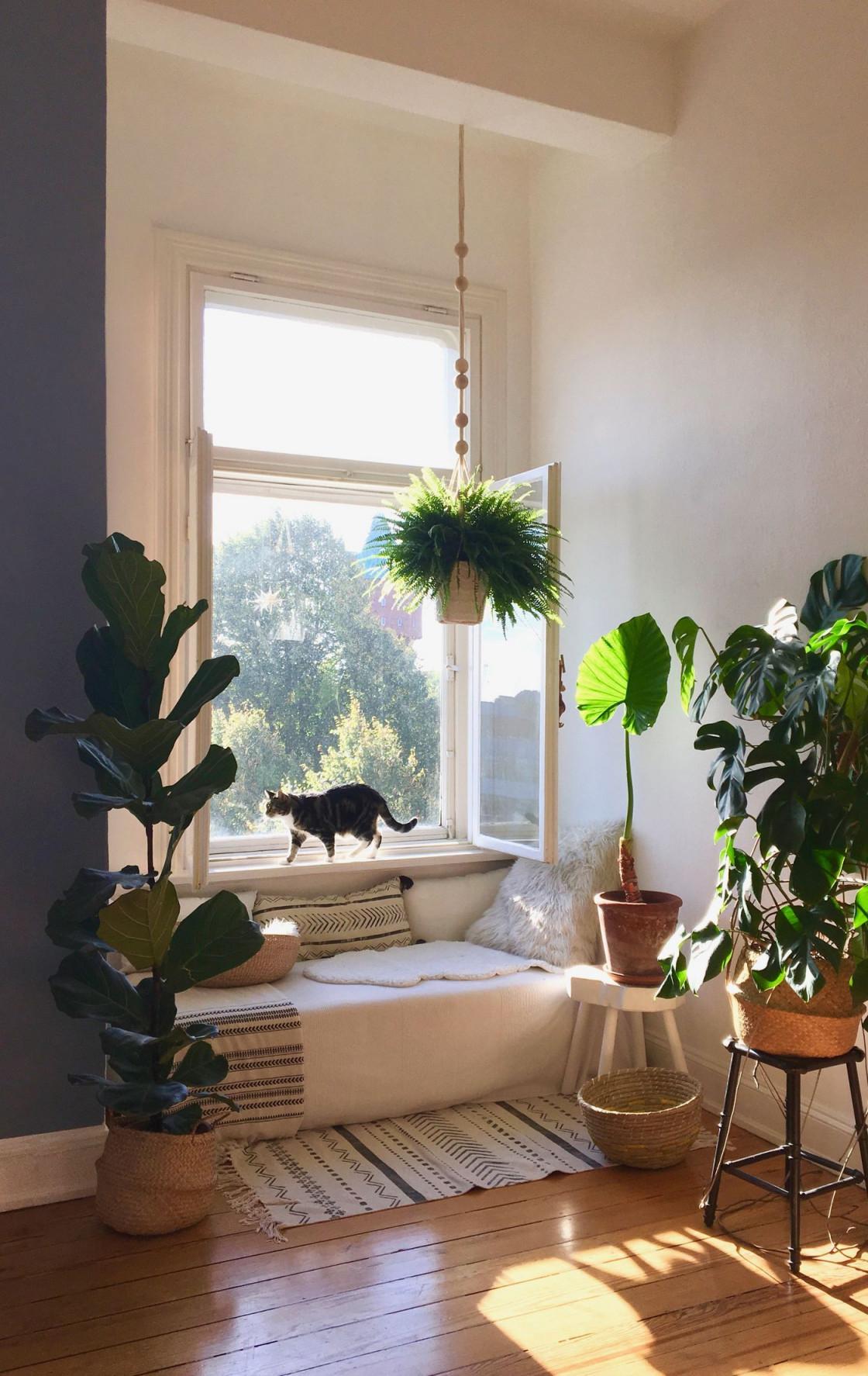 Die Schönsten Pflanzen Deko Ideen von Wohnzimmer Mit Pflanzen Gestalten Bild