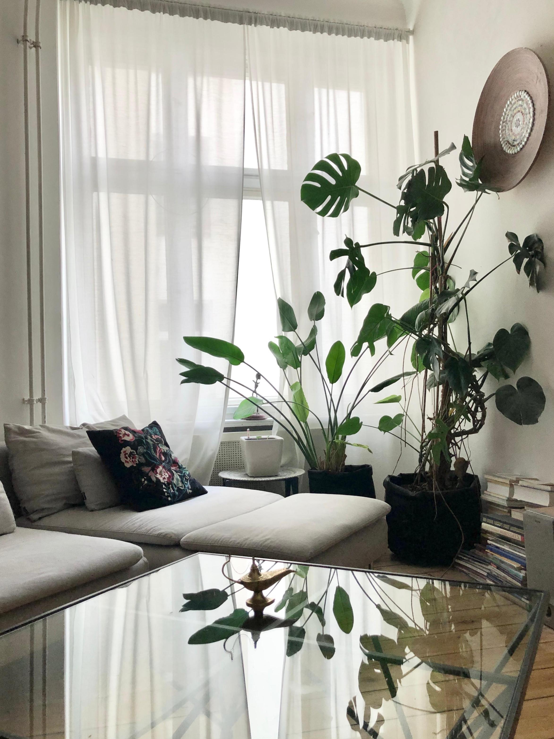 Gardinen – Praktisch Und Schön So Geht's von Wohnzimmer Fensterfront Gardinen Photo