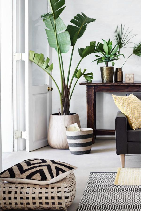 Kreative Wohnzimmergestaltung Für Wenig Geld Zimmerpflanzen von Deko Pflanzen Wohnzimmer Bild