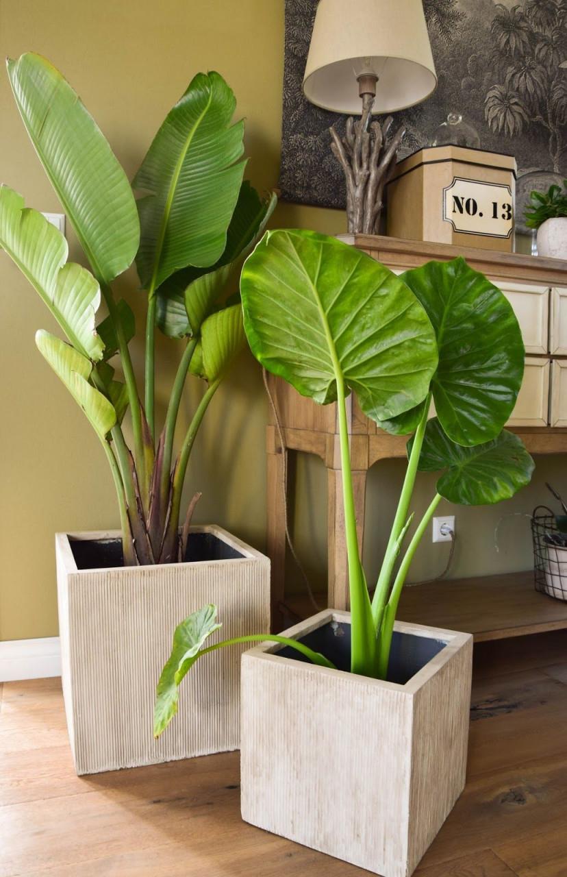 Mein Neues Wohnzimmer Gemütlich Grün Und Mit Einer Prise von Blumentopf Ideen Wohnzimmer Bild