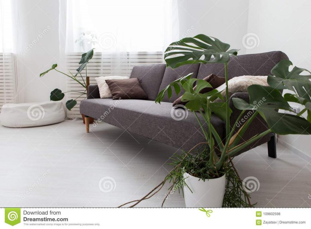 Moderne Studiowohnung Mit Lebenden Pflanzen Grau Im von Moderne Pflanzen Wohnzimmer Photo