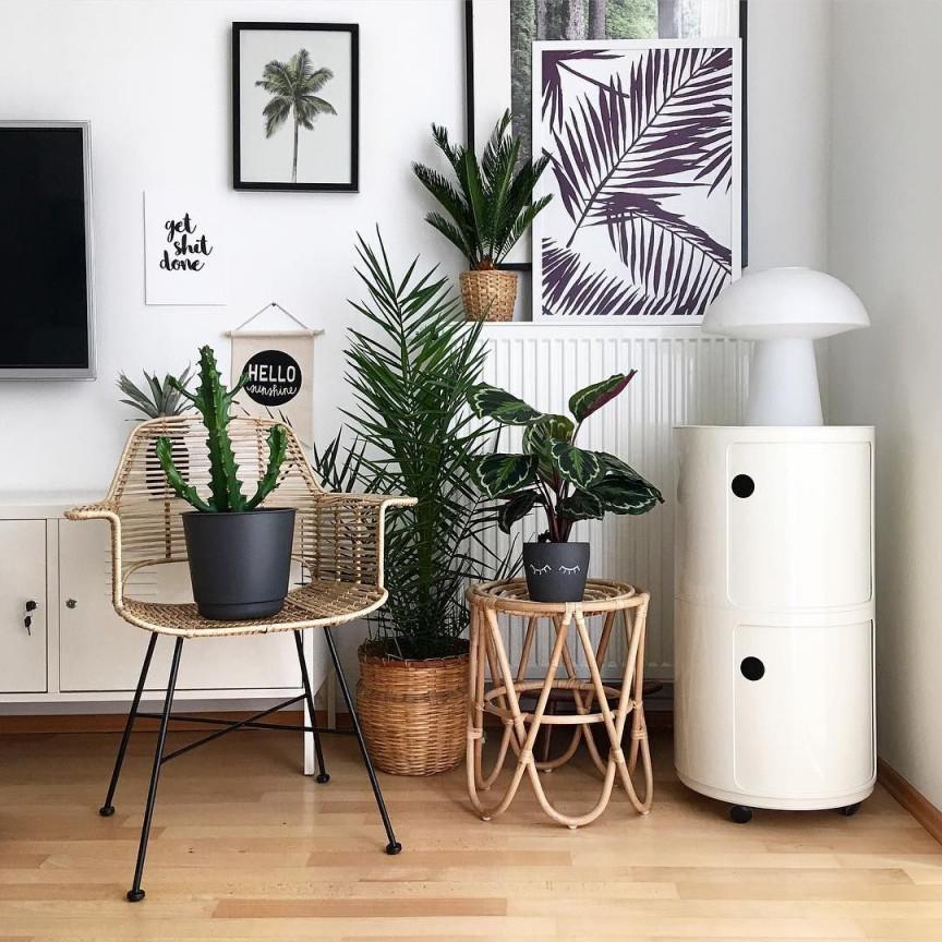 Pflanzen Deko Im Wohnzimmer Living With Plants In 2020 von Wohnzimmer Pflanzen Deko Bild