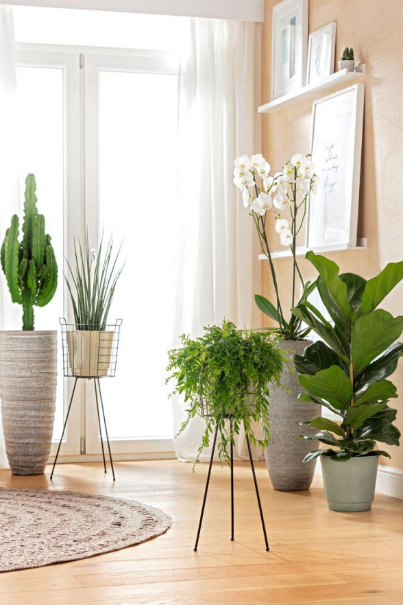 Pflanzen Für Bodentiefe Fenster  Wohnung Pflanzen von Wohnzimmer Pflanzen Deko Bild