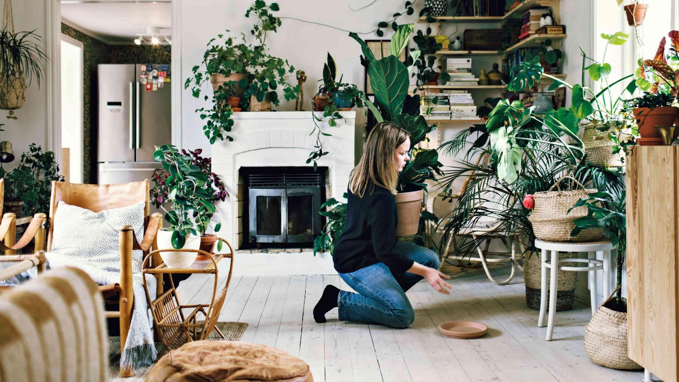 Pflanzen Im Schlafzimmer Mythen Infos  Tipps Für Einen von Pflanzen Ideen Wohnzimmer Bild