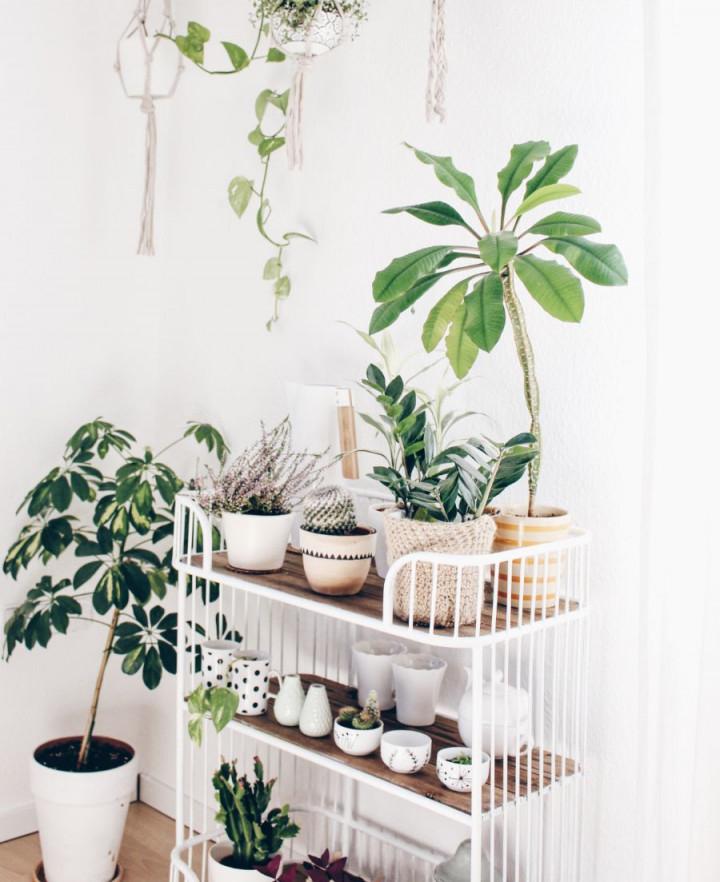 Pflanzenecke Im Wohnzimmer  Wohnzimmer Pflanzen Pflanzen von Pflanzen Ideen Wohnzimmer Bild