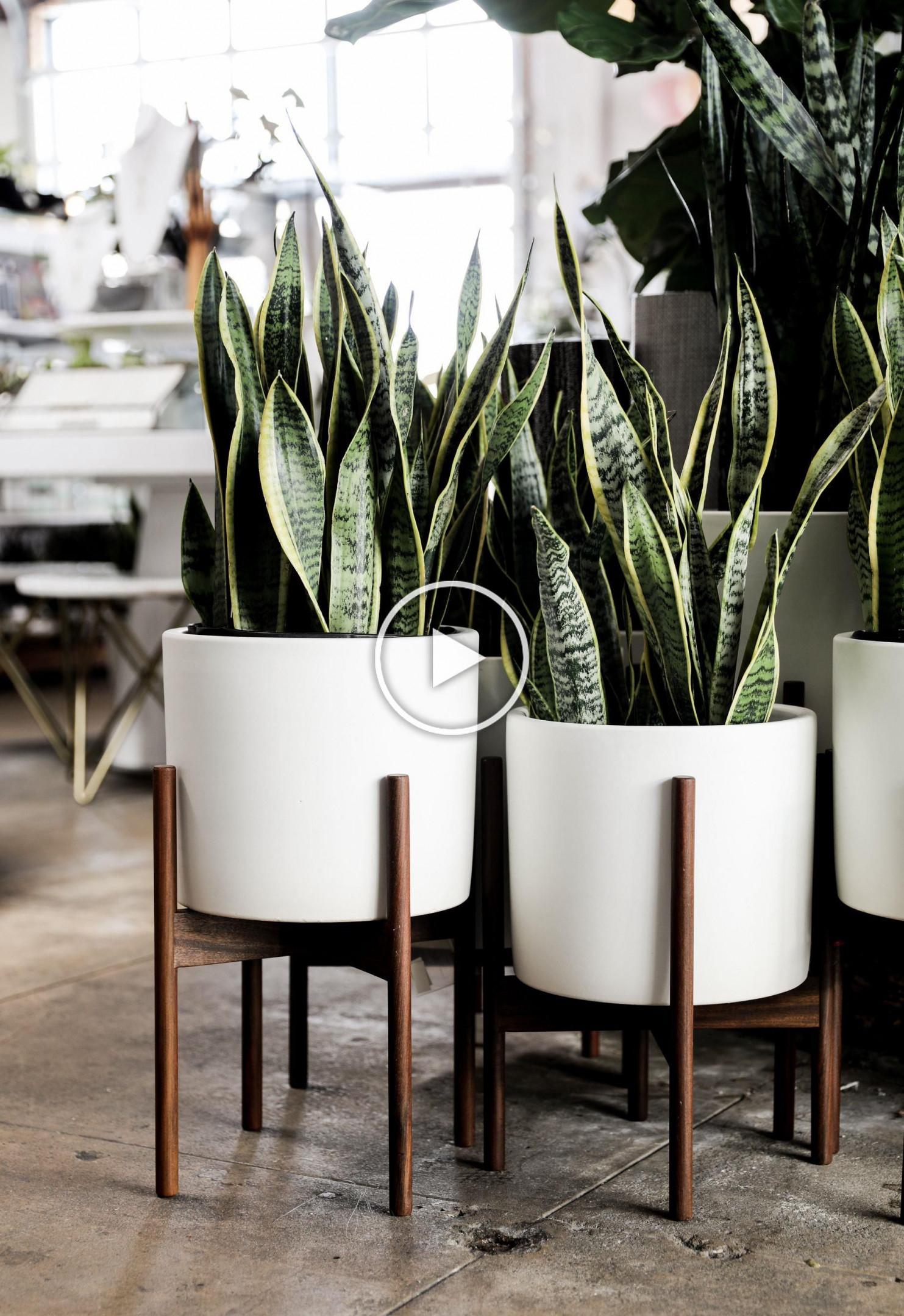 Pin Von Nana Auf Meu Cantinho In 2020  Wohnzimmer Pflanzen von Moderne Pflanzen Wohnzimmer Bild