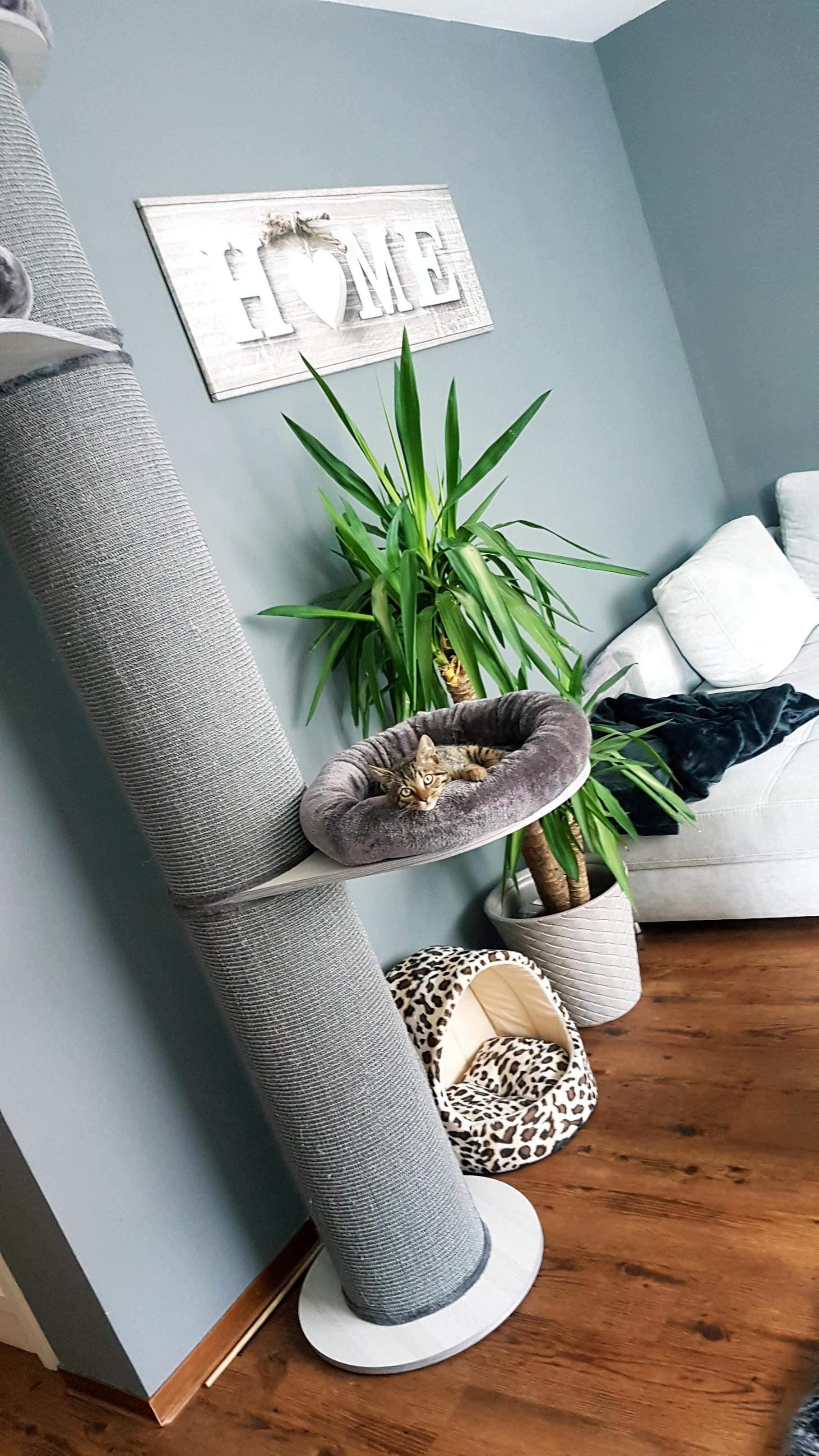 Wenn Der Kleine Sich Sogar Wohlfühlt😍couchliebt Kr von Deko Möbel Wohnzimmer Bild